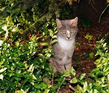 gray cat in the green thickets