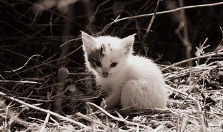 white fluffy baby cat
