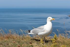 seagull on the north sea coast