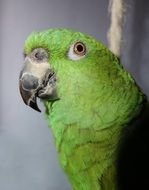 cute green exotic parrot