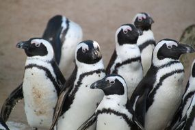 funny penguins in wildlife