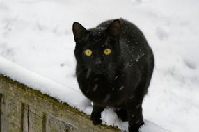 black cat on the roof in the snow