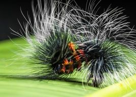 Colorful prickly caterpillar on the green surface