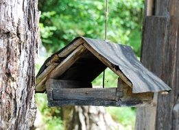 Bird feeder on woods
