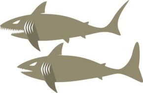 drawn two gray sharks