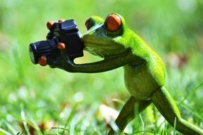 funny frog with camera outdoor