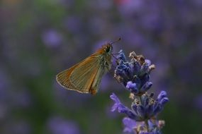 butterfly on a purple flower in nature