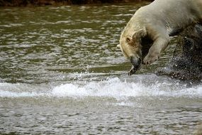 polar bear splashing in water