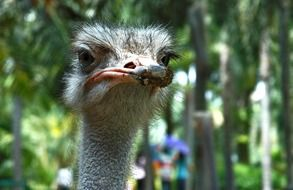 funny portrait of an ostrich
