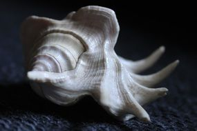 nice spiral seashell in white color