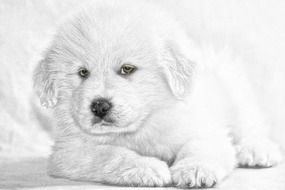 delectable Puppy white Dog