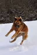 happy dog jumping on the snowy field