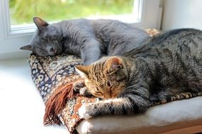 Adorable Cats Sleep