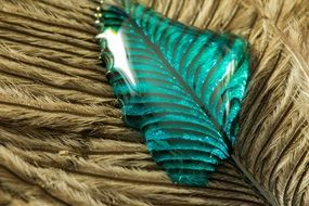 turquoise drop on the feather