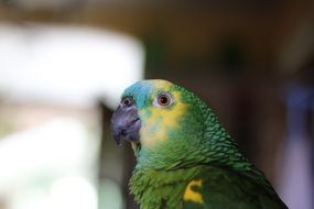 profile portrait of a green exotic parrot