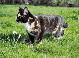 Domestic young cat on a grass