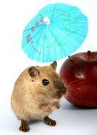 cute hamster with red apple