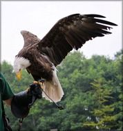 Eagle on the hand