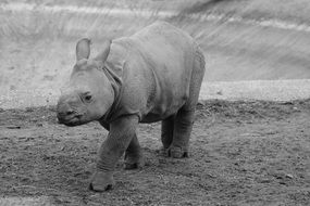 gray rhinoceros on the ground
