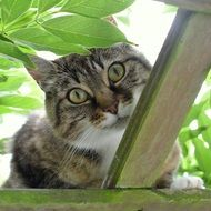 curious domestic cat in hiding place