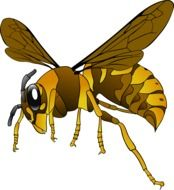 Hornet Wasp Insect drawing