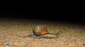 slimy snail on the road
