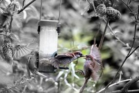 small gray birds at the feeder