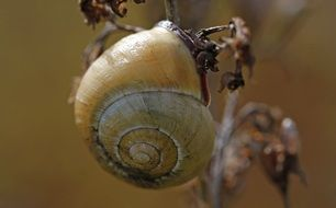 snail on a dry plant