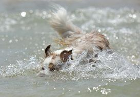 small dog swimming in the water