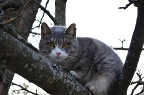 Cat on the branch of the tree