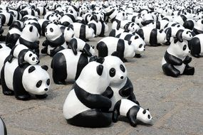 Exhibition of the pandas