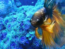 wonderful aquarium fish