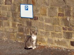 cat by Parking