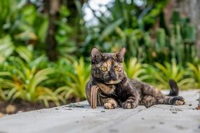 homeless cat in Thailand