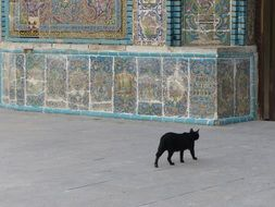 black cat near the wall with tiles