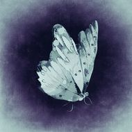 drawing of a white butterfly on the purple background