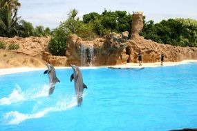 two dolphins on a show in the Mediterranean sea