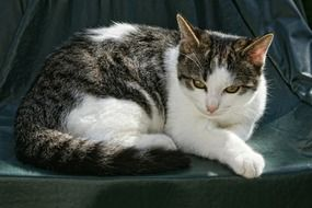 relaxed domestic cat outdoor