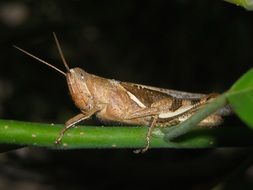 grasshopper on the green branch