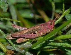 brown grasshopper sitting on a green plant