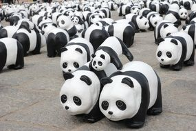 exhibition of pandas