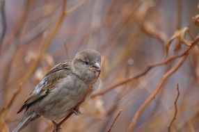 tiny sparrow on the branch
