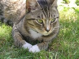 cat with expressive eyes on green grass