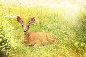 deer lies on green grass