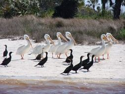 black and white birds on the beach