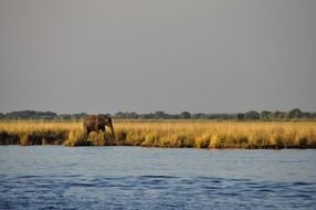 distant view of an elephant near the water in Botswana