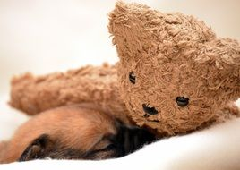 Puppy Dog Sleeping with teddy bear toy