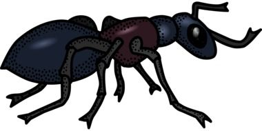 Illustration of black insect