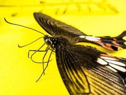 butterfly on the neon yellow surface