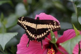 butterfly sits on a pink flower